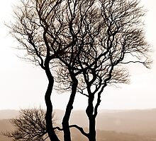 Striking Trees by Nicholas Richardson