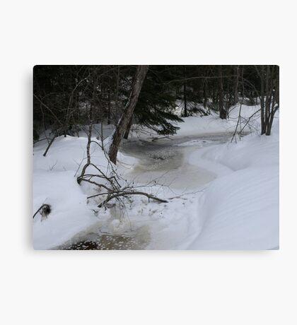 NC along Humphreys brook trail Canvas Print