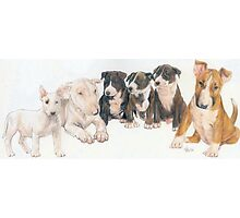 Bull Terrier Puppies Photographic Print
