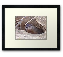 Mama Groundhog Framed Print