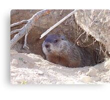 Mama Groundhog Canvas Print