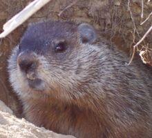 Mama Groundhog Sticker