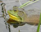 Bull Frog Reflection by Martha Medford
