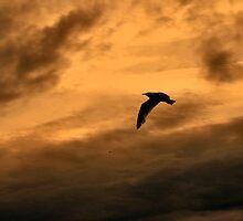 silhoutte sky by smurfette57