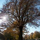 Campus in the Fall by John Harrison