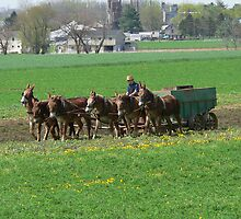 Plowing In Amish Country by kevint