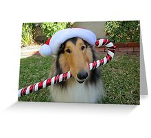 Christmas Collie, Rough Sable Greeting Card