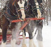 Sleigh Ride by Marc Evans
