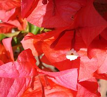 sunny flowers by kveta
