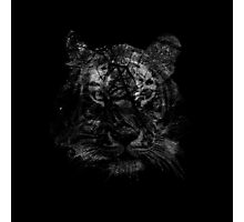 Tiger in black and white Photographic Print