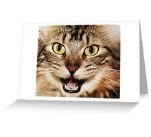 Little Bit Of Catitude! Greeting Card