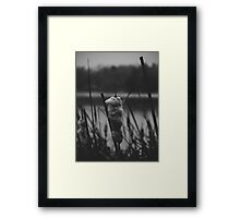 One-Eyed Octopus Photography Framed Print