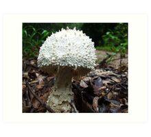 Marshmellow Mushroom!!...... Art Print