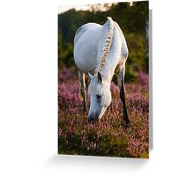 Beautiful Grey in the New Forest Greeting Card