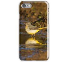 Grey wagtail iPhone Case/Skin