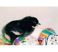 black chick Photographic Print