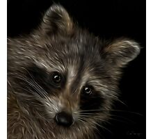 Raccoon Buddy Photographic Print