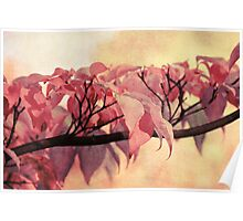 Red Autumn Day Poster