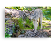 Forest Guardian 2 Metal Print