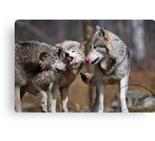 Some Guys just don't get the message Canvas Print