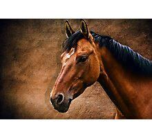 The horse portrait Photographic Print