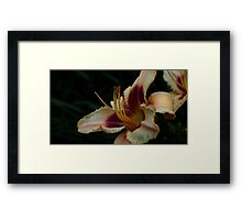 0942 - HDR Panorama - Lilly Framed Print