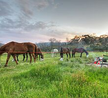 Horses feeding at sunrise by Christopher Meder