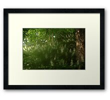 0950 - HDR Panorama - Flowers Framed Print