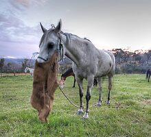 Horses feeding at sunrise by Christopher Meder