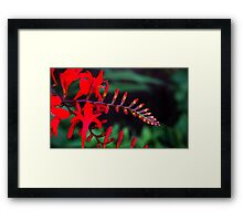0959 - HDR Panorama - Red Flowers Framed Print