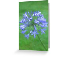 African Lily in Monet style Greeting Card