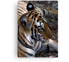 Bengal Tiger Canvas Print