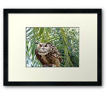 Eagle Owl 1 Framed Print