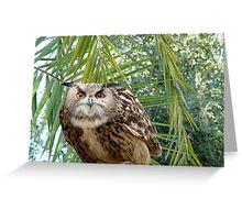 Eagle Owl 1 Greeting Card