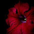 Do Flowers Sleep? by GerryMac