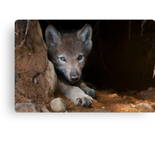 Timber Wolf Pup in Den Canvas Print