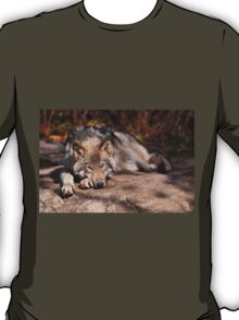 Timber Wolf At Rest T-Shirt