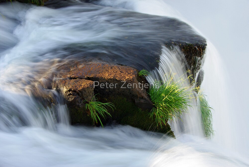Clinging for dear life by Peter Zentjens