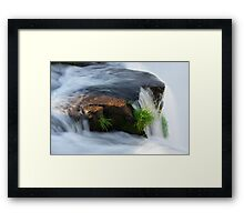 Clinging for dear life Framed Print