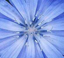 Blue Flower by Sara Wiggins