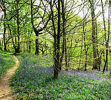 Bluebell Trail by Andrew Bret Wallis