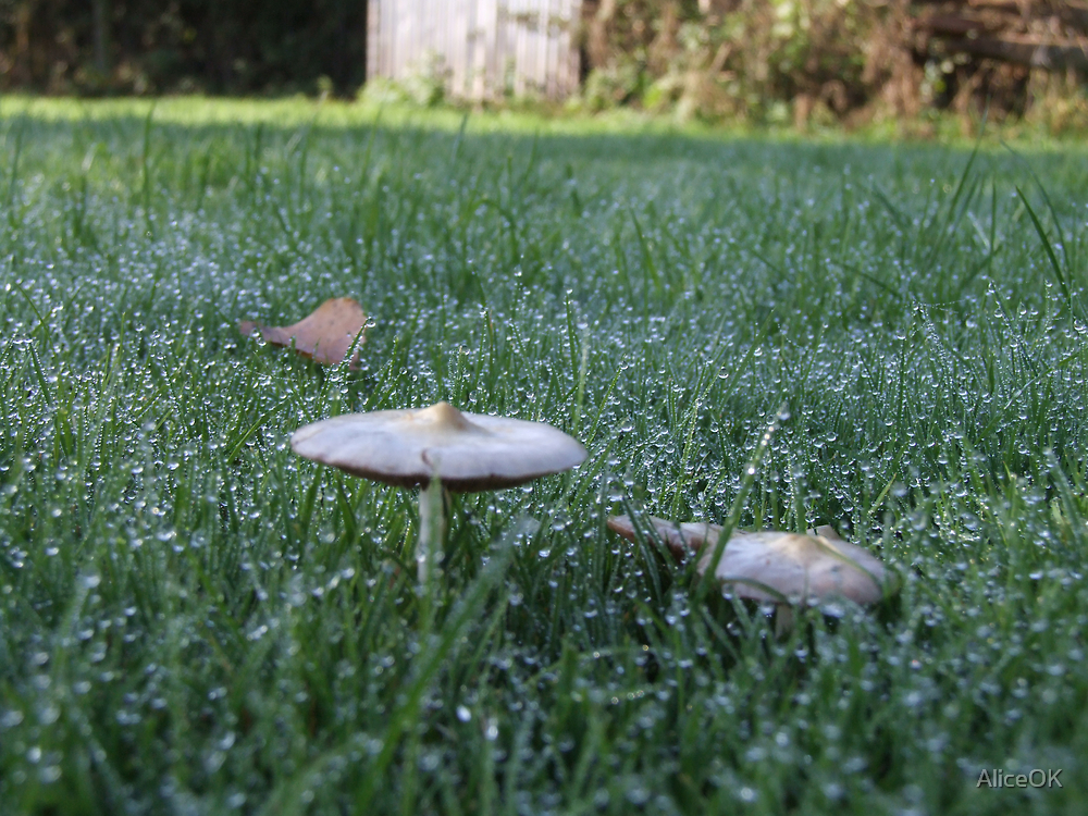 Dew-touched shrooms by AliceOK