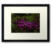 1048 - HDR Panorama - Asters Framed Print