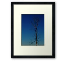 1073 - HDR Panorama - Dead Tree Framed Print
