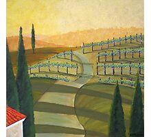 Tuscany Vinnicola II Photographic Print