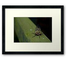 Cicada Macro Framed Print