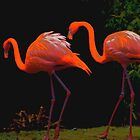pink flamengo by soulexperience