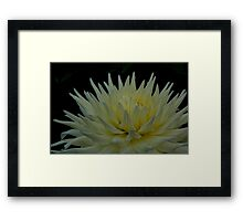 Cream Yellow Flower Framed Print