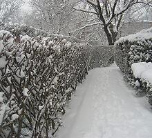 Finally Snow by nfelczer