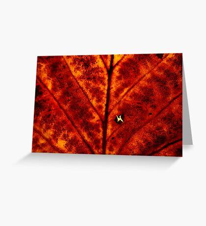 Tulip Tree Leaf Greeting Card